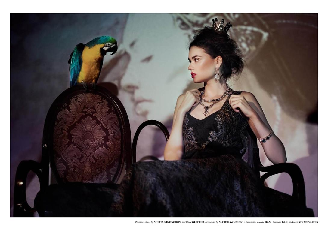 Bird Of Paradise5